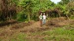 planting manioc, cassava