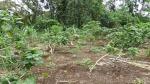 Aibica garden